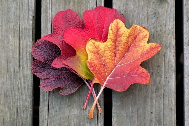 leafs on a fall