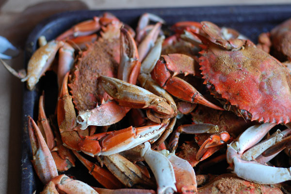 crabs chesapeake bay
