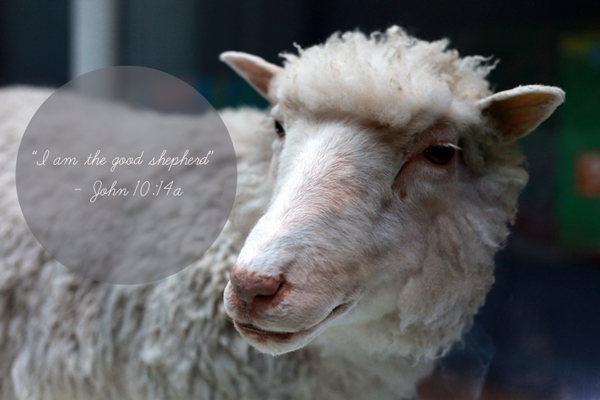 "John 10:14a {Jesus said} ""I am the good shepherd"" #Bible #quotes #scripture"
