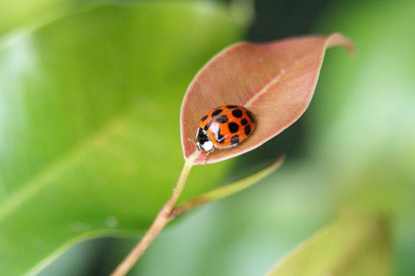ladybug01_ardelfin_morguefi